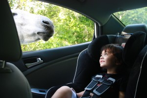 """My boy saying """"hi"""" to a donkey on the road:) #priceless #unforgettable"""