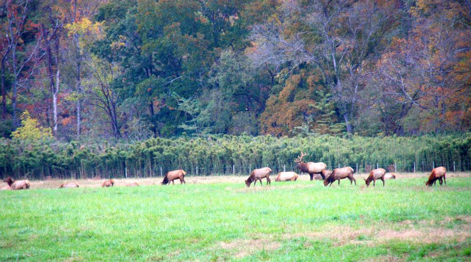 Elk watching... perfect for kids. Another first:)